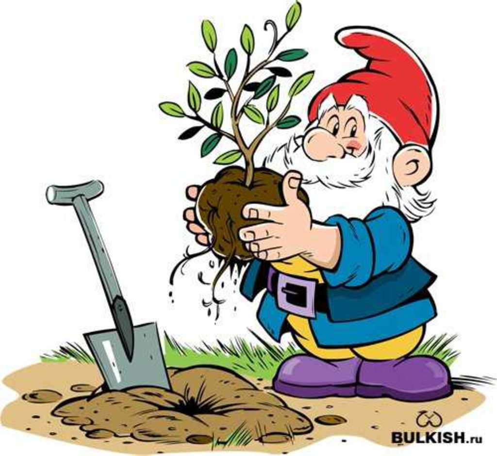 Рисунок садовника